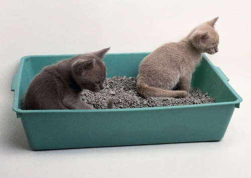 Do's and Don'ts during Litter Box Training
